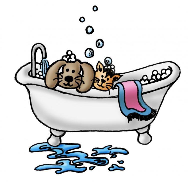 dog-cat-grooming